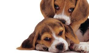"""Gli scienziati dei Lincei:  la sperimentazione sugli animali  necessaria per la salute dell""""uomo"""