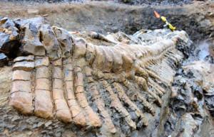 Messico: dinosauro di 72 milioni di anni  riapre studi naturalistici sull'America