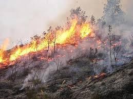 Sardegna in fiamme. Persi 8mila ettari  Incendi violenti anche in Friuli e Calabria