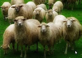 Bufera per Regione e Comune di Roma:  manifestazioni contro la nuova discarica.  Bloccata l'Ardeatina anche con le pecore
