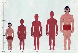 Legame tra altezza e cancro  I più alti corrono maggiori rischi