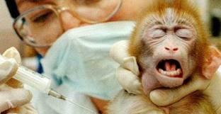 Test sugli animali, l'Italia non ha recepito la direttiva europea e rischia 150 mila euro di multa al giorno