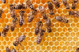 Donna polacca condannata a Gorlice per aver sterminato per errore 2 milioni di api con i pesticidi