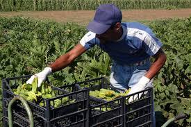 Agricoltura, Regione Lazio: 37,2 mln per nuovi bandi. Zingaretti rilancia la scommessa agroalimentare