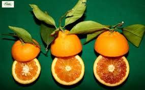 """Il Giappone apre il mercato alle arance italiane """"Moro"""" e """"Sanguinello"""""""