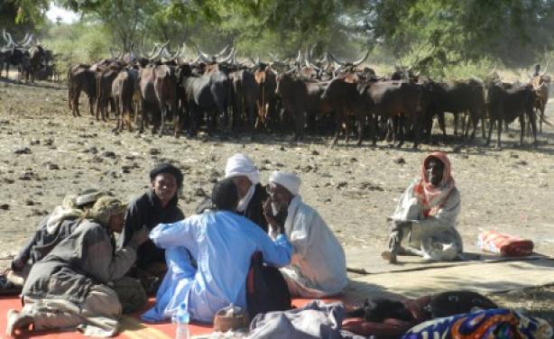 Guerra delle capre tra etnie diverse in Kenya: per ora 75 morti