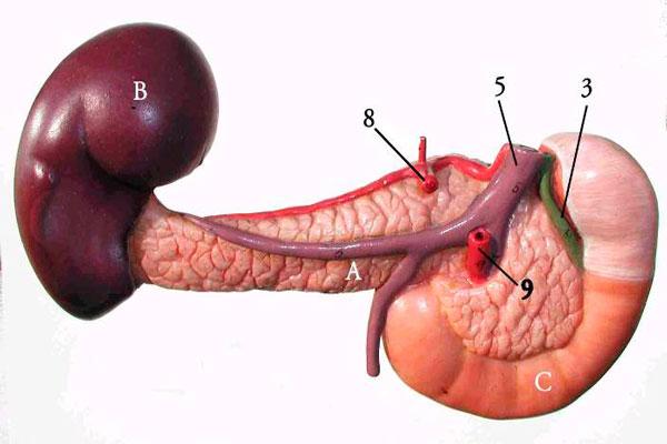 Semplice esame delle urine per diagnosticare il tumore al pancreas