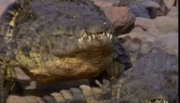 Indonesia: il carcere di drogati e spacciatori sarà controllato dai … coccodrilli