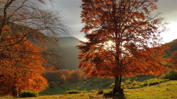 Il Creato, noi e l'Ambiente. A Bologna ne parla Sorella Natura