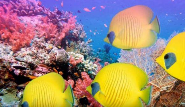 Hawaii: Obama crea la più grande riserva marina al mondo. Cinque volte l'Italia