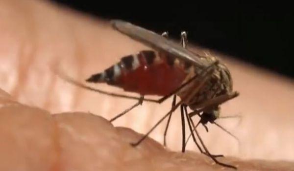 Malaria: realizzato un vaccino con ottimi risultati