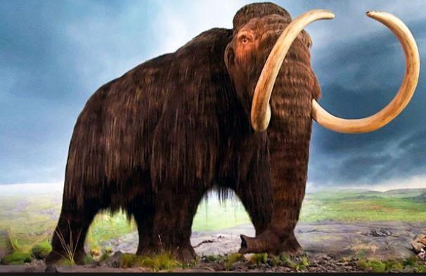 """Mammut: estinti per il """" disordine"""" del loro Dna"""