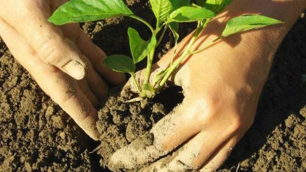 Dalla scienza le risposte per migliorare la fertilità del suolo