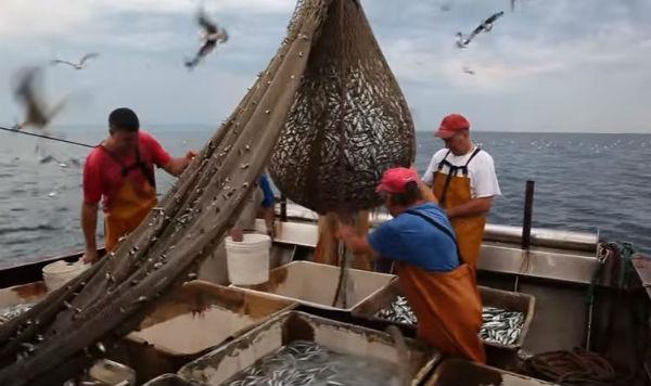 Industria ittica: le trasformazioni della lavorazione