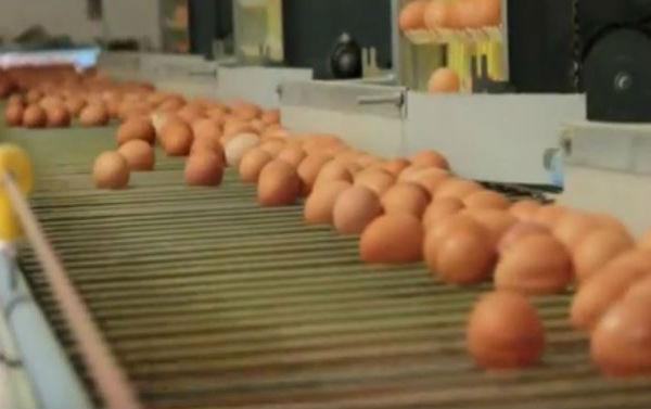 Altre uova inquinate in Italia. Sequestrate circa 100 mila