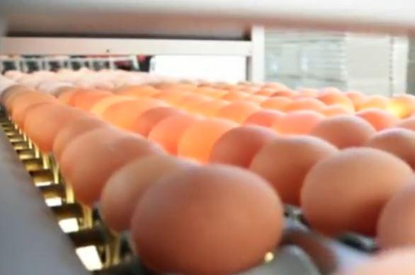 La storia delle uova contaminate in Germania