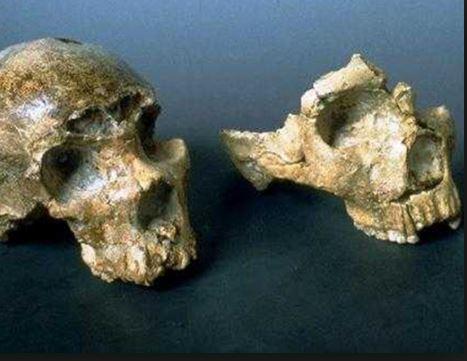 Scoperti i primi resti dell'uomo in Europa