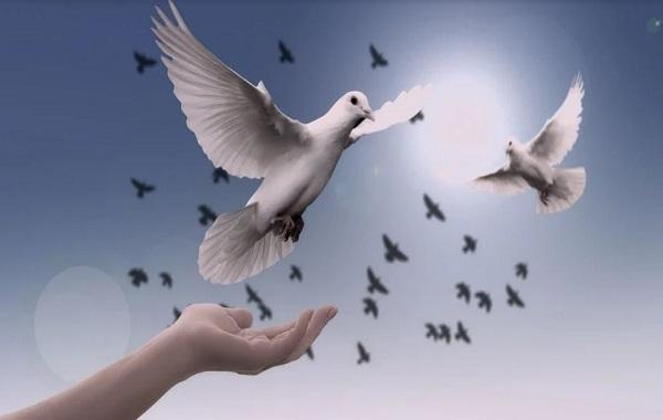 Papa Francesco ricorda che l'Anno Nuovo si apre con la Giornata mondiale della Pace