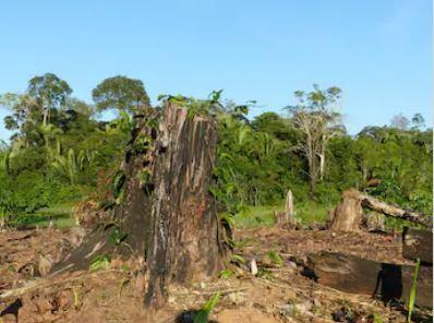 Continua la strage degli ambientalisti: 227 uccisi nel 2020